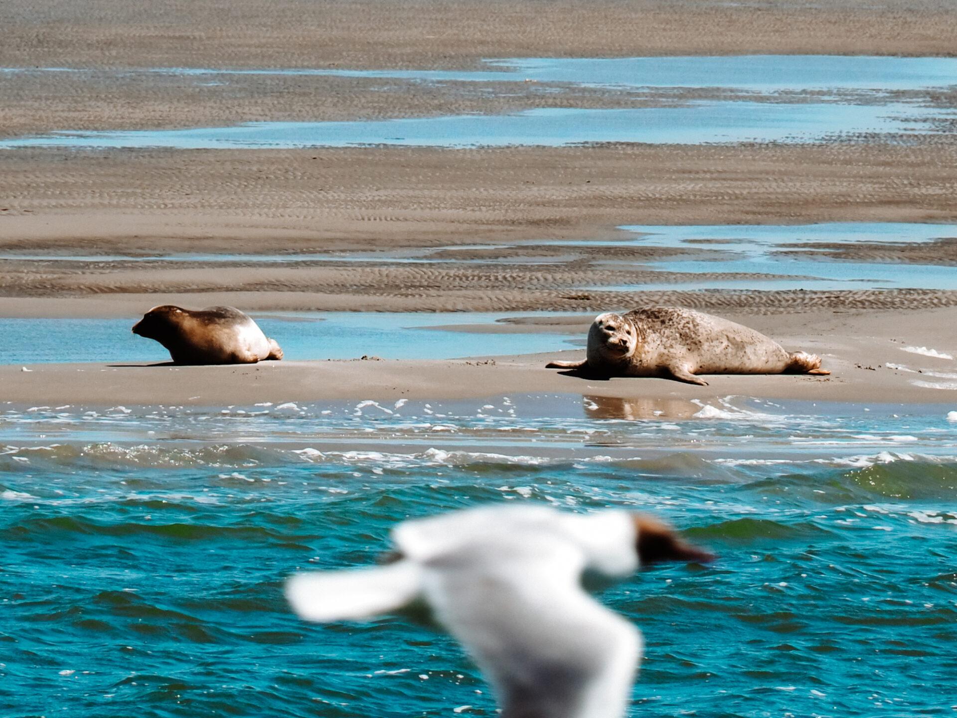 Zeehonden boottocht Oudeschild Waddenzee
